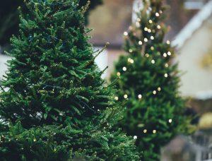 christmas-tree-1149919_960_720